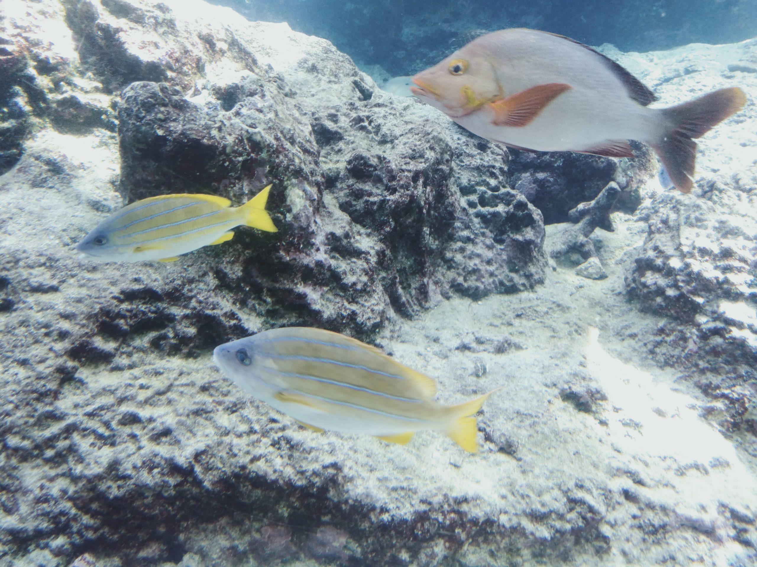 okinawa20-aquarium3